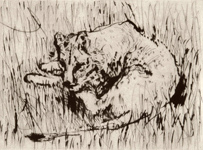 Lioness by William Kentridge at Robert Brown Gallery
